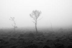 paisaje-blanco-y-negro-con-niebla-35098083